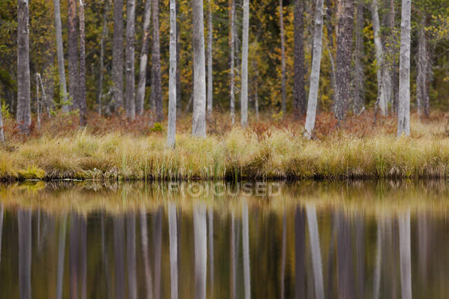 Finland, Kainuu, Kuhmo, Autumn trees reflecting in lake — Stock Photo
