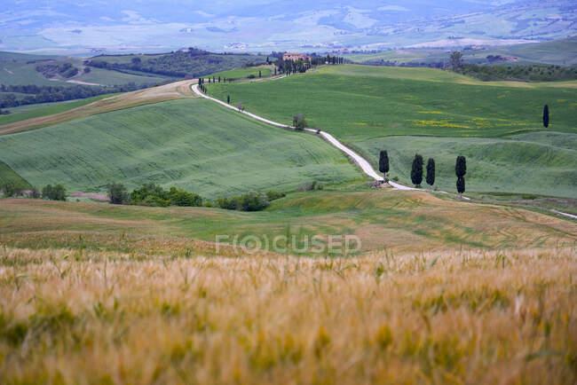 Italie, Toscane, Vallée de l'Orcia, Pienza, Champs et collines — Photo de stock
