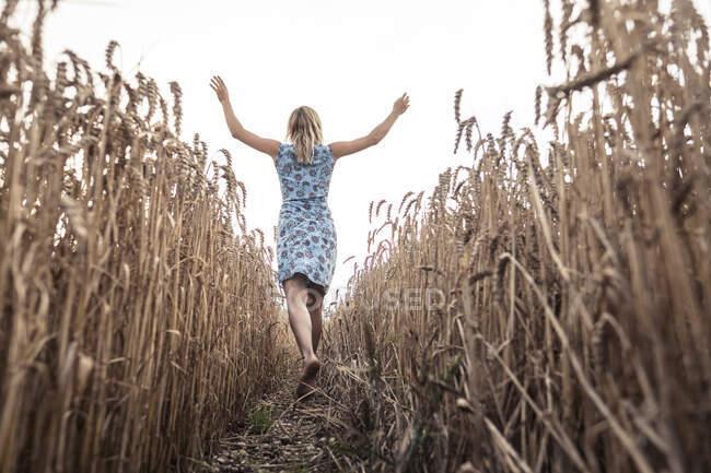 Vista trasera de la mujer emocionada caminando descalza en un campo de trigo - foto de stock