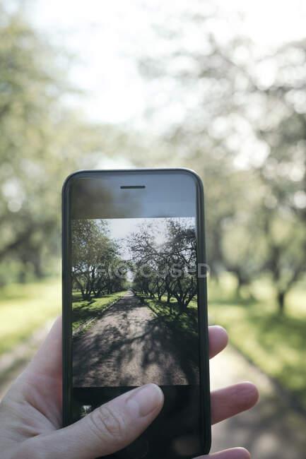 Женская рука фотографирует в парке со смартфоном — стоковое фото