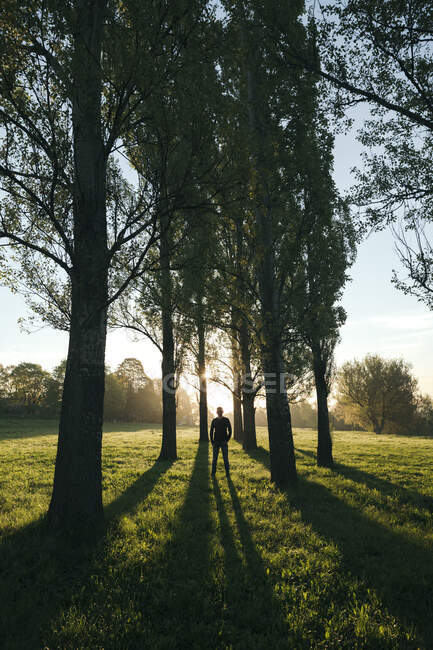 Silhouette of man standing in a park among trees at sunrise — Stock Photo