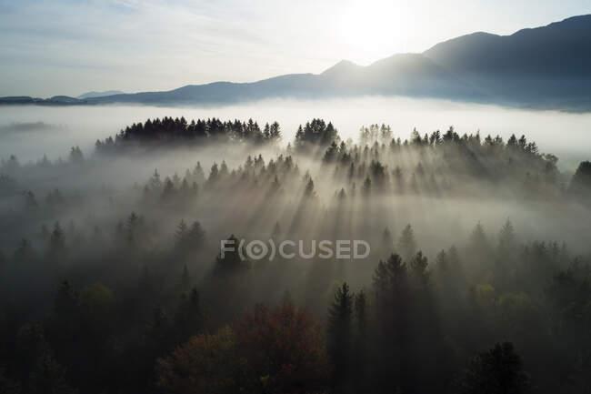 Alemanha, Baviera, Garmisch-Partenkirchen, Vista Drone de Murnauer Moos pântano no nascer do sol nebuloso — Fotografia de Stock