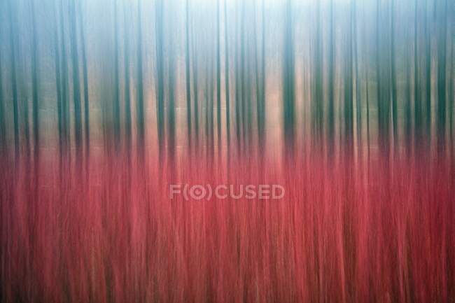 Іспанія, провінція Куенка, Канамарес, Ред - очерет, оброблений для лиходіїв — стокове фото