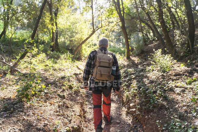 Back view of senior man with backpack hiking in forest — Stock Photo