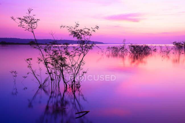 Закат солнца в бассейне Амазонки, Манхэттен, Бразилия — стоковое фото