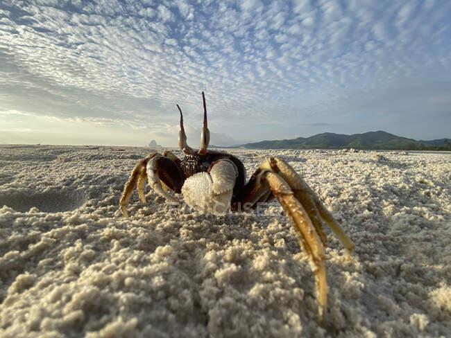 Cangrejo divertido en la playa, Ko Yao Yai, Tailandia - foto de stock