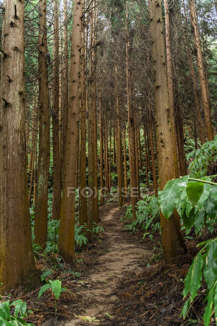 Forest path, Sao Miguel Island, Azores, Portugal — Stock Photo