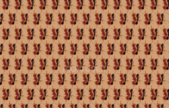 Modello di formiche sullo sfondo marrone — Foto stock