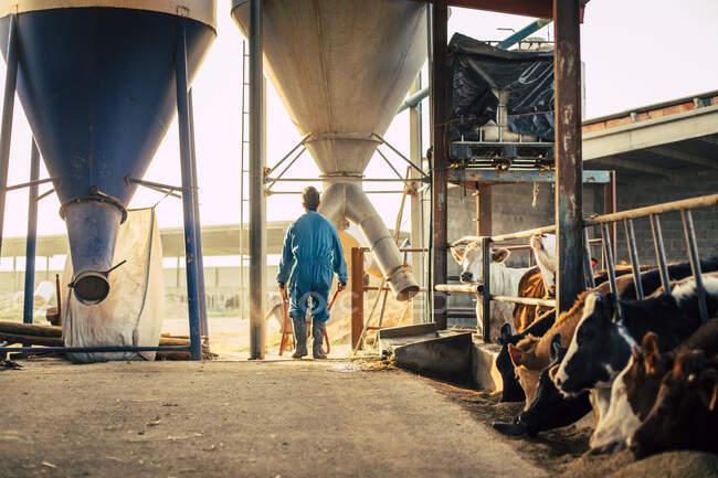 Молодий фермер у синьому одязі розвантажує корм із срібла у тачку. — стокове фото