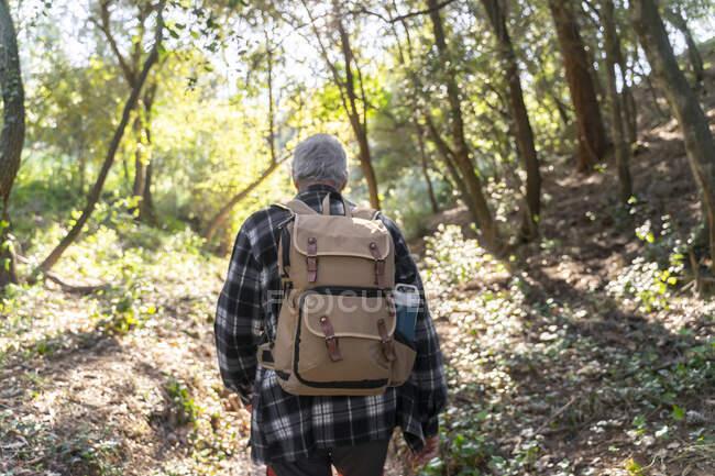 Vista posteriore di uomo anziano con zaino escursioni nella foresta — Foto stock
