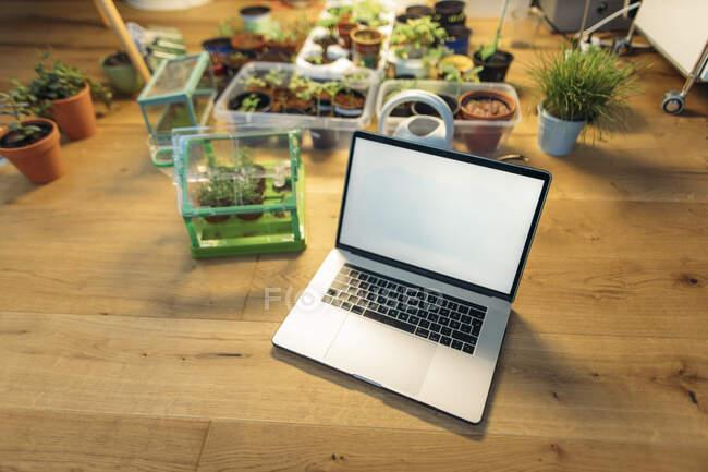 Ordinateur portable sur le sol en bois à côté des plantes — Photo de stock