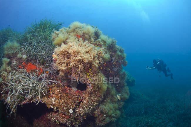França, Córsega, Mergulhador fotografando corais crescendo no fundo do mar — Fotografia de Stock