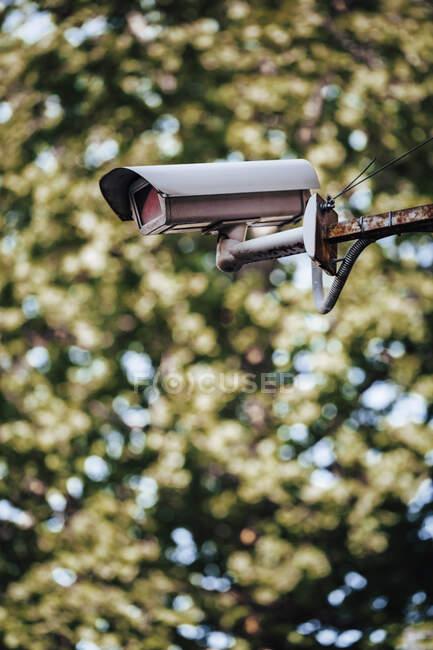 Cámara de seguridad contra árbol - foto de stock