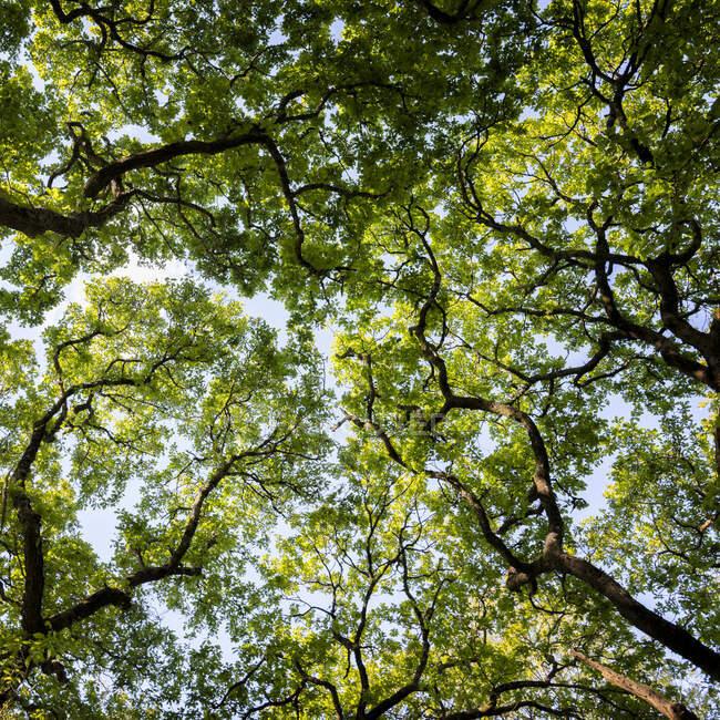 Folhas verdes na árvore em um fundo de árvores. — Fotografia de Stock