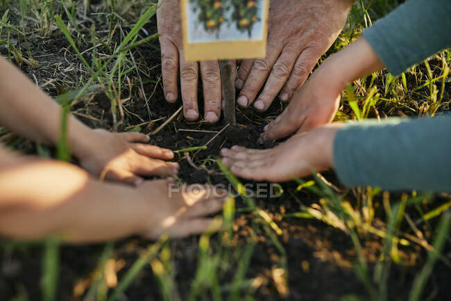 Cropped hands of family planting together in garden — Stock Photo