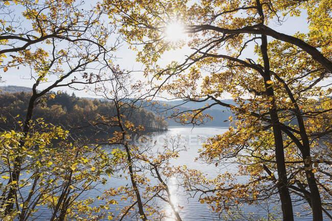Германия, Северный Рейн-Вестфалия, Эйнрур, Осенние деревья против солнца, сияющего над озером Оберзее — стоковое фото