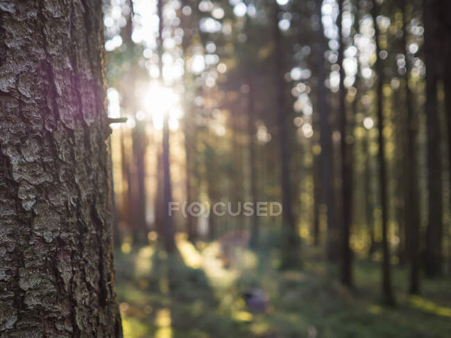 Germania, Baviera, tronco d'albero nella foresta dell'Alto Palatinato — Foto stock