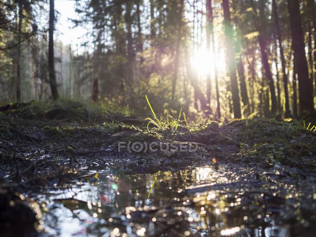 Germania, Baviera, Luce del sole illuminante pozzanghera nella foresta dell'Alto Palatinato — Foto stock