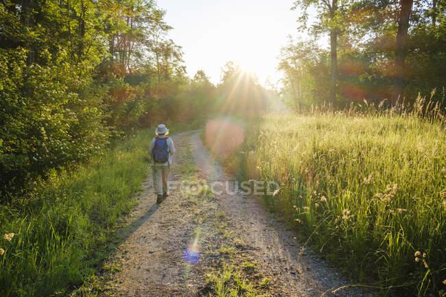 Vista posteriore dell'escursionista anziano che cammina verso la foresta durante la giornata di sole, Baviera, Germania — Foto stock