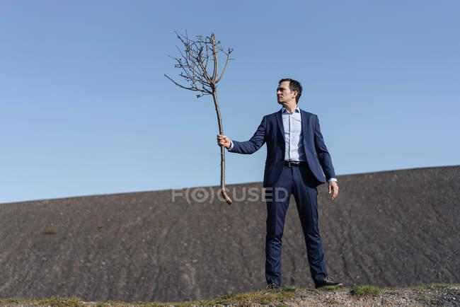 Hombre de negocios maduro sosteniendo un árbol desnudo en una punta de mina en desuso - foto de stock