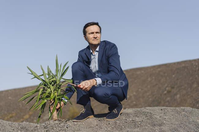 Hombre de negocios maduro con una planta agachada en una punta de mina en desuso - foto de stock