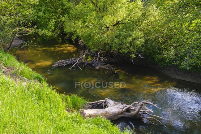 Alemania, Baviera, Altdorf bei Nurnberg, río Schwarzach en primavera - foto de stock
