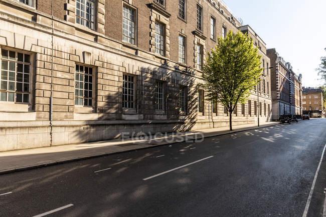 Reino Unido, Londres, Estrada vazia durante toque de recolher com árvore no bairro de Bloomsbury — Fotografia de Stock