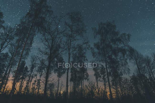 Зоряне небо над деревами в Содерманланді, Никопінг, Швеція. — стокове фото