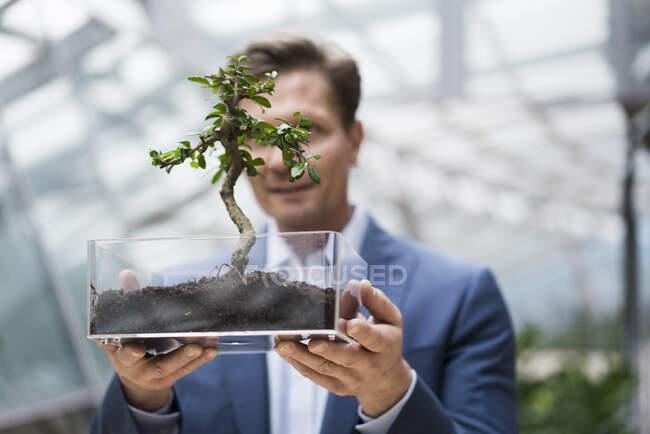 Бізнесмен спостерігає, як бонсай росте у прозорій коробці. — стокове фото