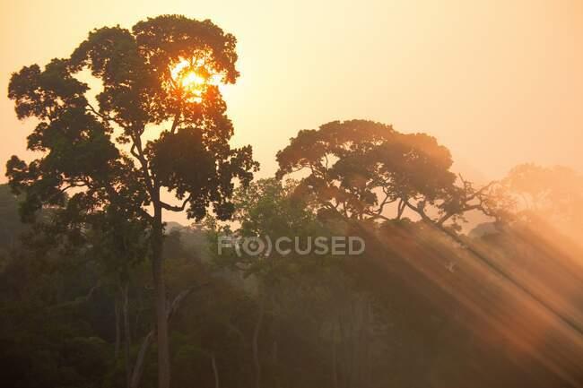 Repubblica Centrafricana, Sole nascente che illumina le cime degli alberi della Riserva Speciale di Dzanga-Sangha — Foto stock