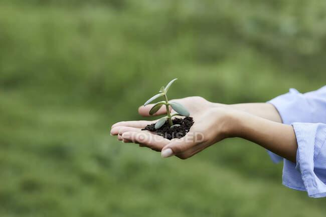 Mãos segurando planta e solo — Fotografia de Stock