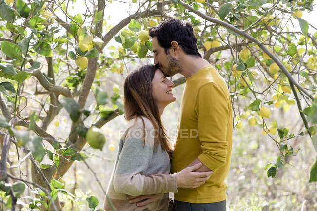 Люблячий чоловік цілується на лобі дівчини, стоячи біля лимонного дерева на фермі. — стокове фото