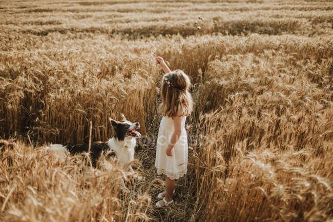 Chica jugando en campo de trigo con frontera collie perro - foto de stock