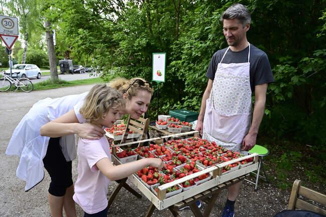 Vendedor masculino mirando a madre e hija eligiendo fresas en puesto de mercado - foto de stock