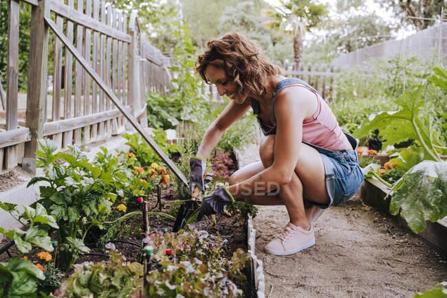 Посмішка серед дорослої жінки збирає овочі з піднесеного ліжка в саду. — стокове фото