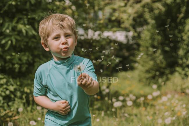 Милый блондин, раздувающий одуванчики, стоя в саду в солнечный день — стоковое фото