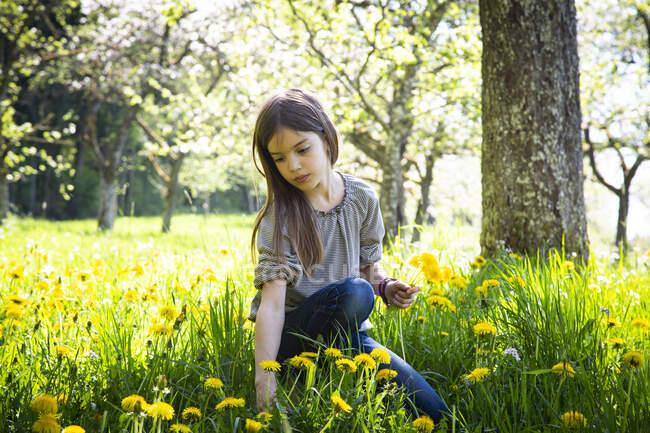 Портрет девушки, собирающей одуванчики на лугу — стоковое фото