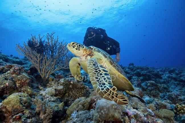 Palau, Blue Corner, Diver and sea turtle underwater — Stock Photo
