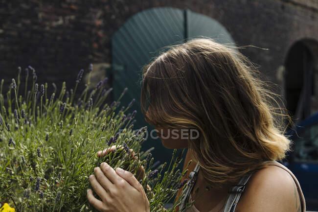 Молодая женщина осматривает растение лаванды — стоковое фото