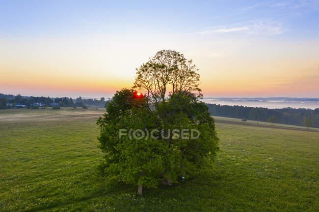 Alemanha, Baviera, Walchstadter Hohe, Drone vista de árvores verdes que crescem no prado ao nascer do sol — Fotografia de Stock