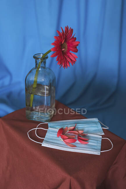 Studio shot of vase with red blooming flower and petals on protective face masks — Stock Photo