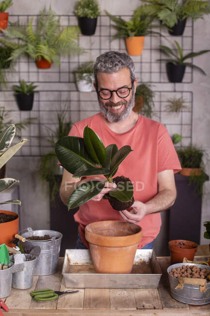 Smiling bearded mature man planting rubber fig at plant nursery — Stock Photo