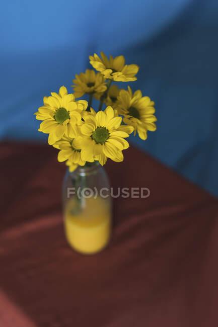 Студийный снимок желтых цветов, цветущих в стеклянной бутылке, наполненной желтой водой — Stock Photo