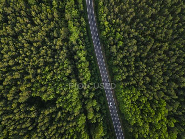 Russia, Oblast 'di Leningrado, Tikhvin, Veduta aerea della strada asfaltata che taglia attraverso una vasta foresta verde — Foto stock