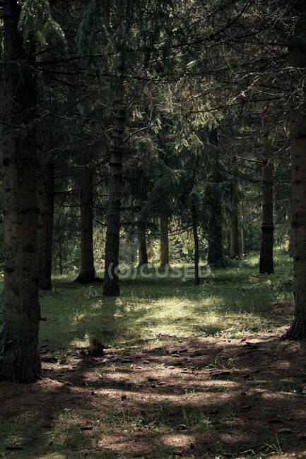 Manchas de luz en el suelo del bosque en un día soleado - foto de stock