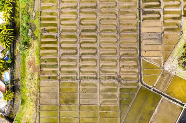 Mauricio, Río Negro, Tamarin, Vista en helicóptero de filas de salinas - foto de stock