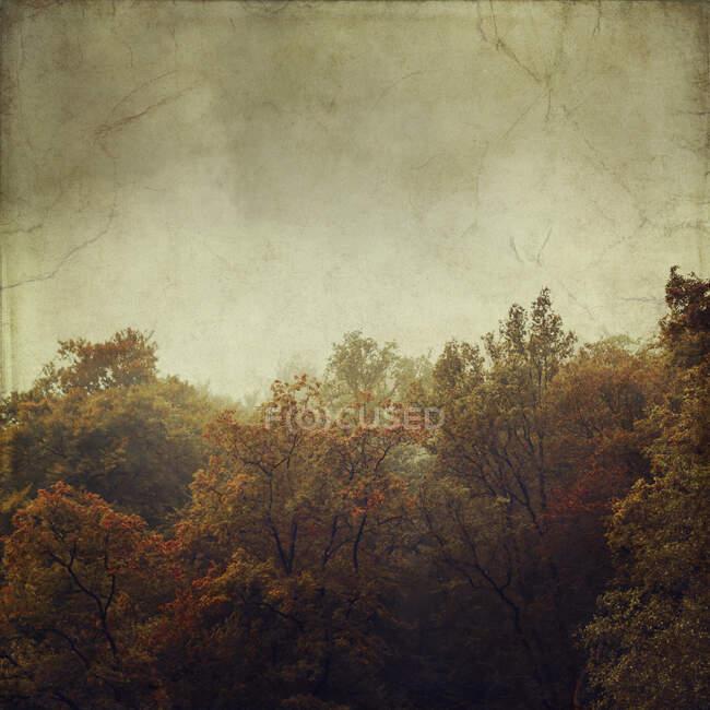 Старая фотография туманного осеннего леса на рассвете — стоковое фото