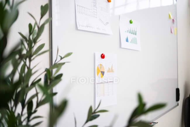 Various charts pinned on whiteboard — Stock Photo