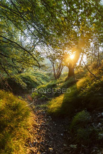 Luce solare vista attraverso gli alberi nel bosco all'alba, Orobie, Lecco, Italia — Foto stock