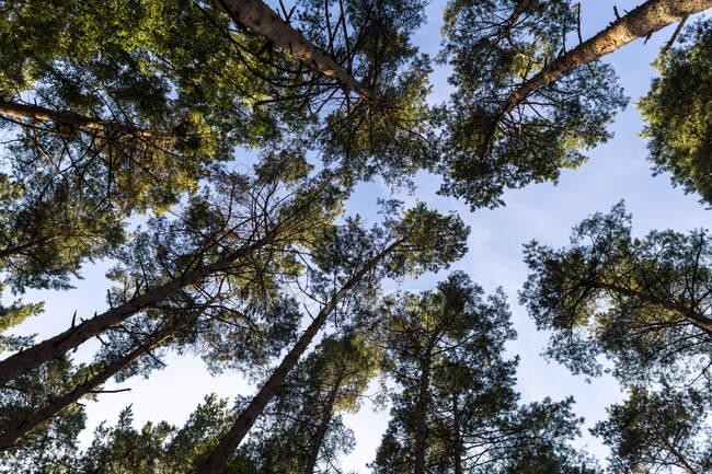 Прекрасный вид на лес — стоковое фото